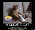 Welfare-Cat-300x258